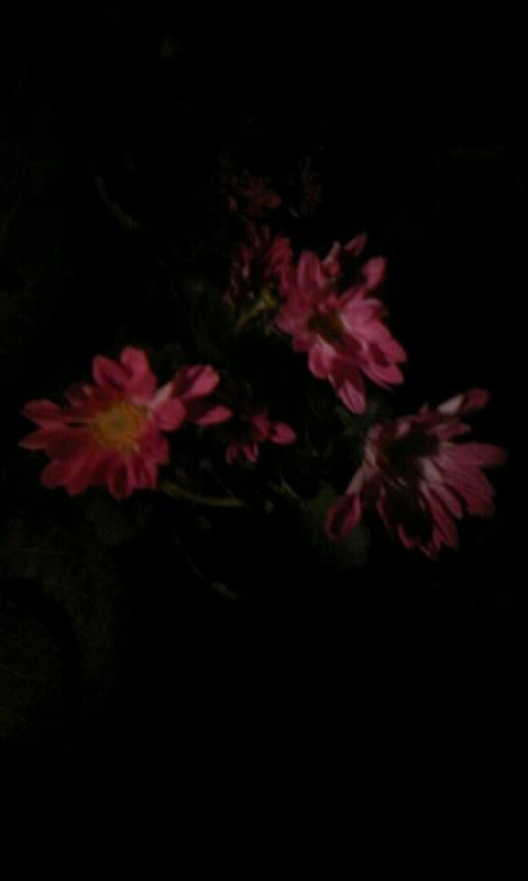 101029_225402夜の小菊