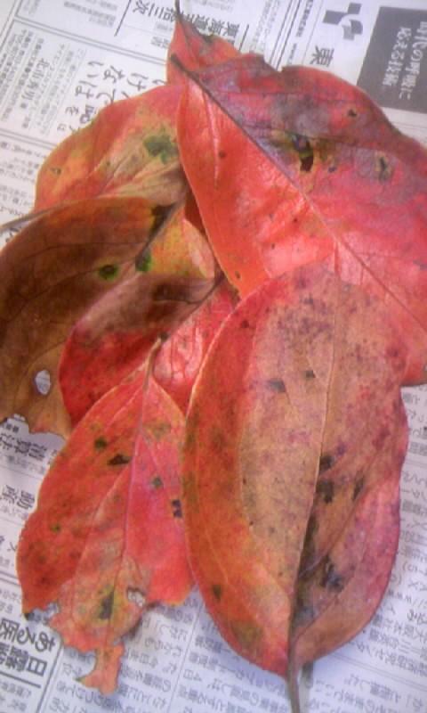 101031_083359柿の落ち葉