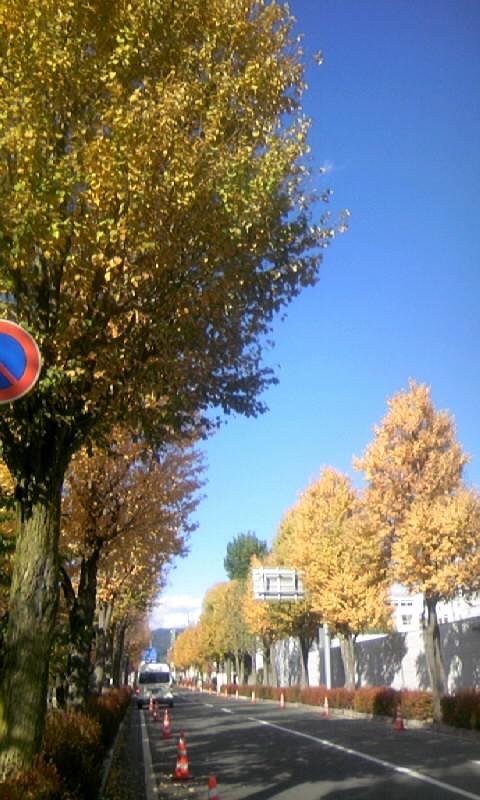 101103_142324松本にて
