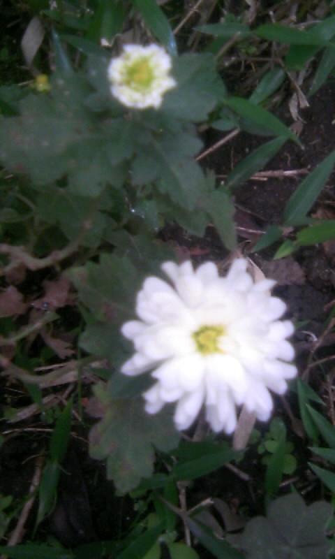 101112_080214小菊