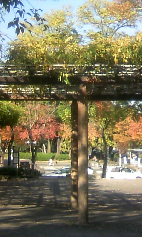 101117_140009名城公園辺り