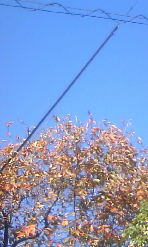 101123_135021柿の紅葉