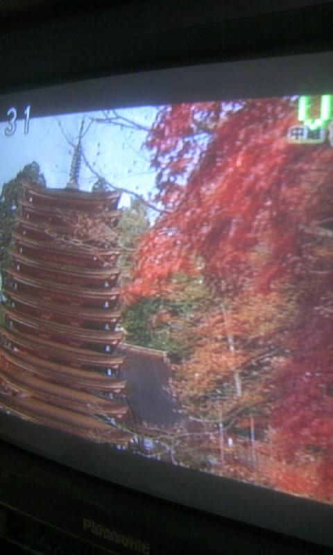 101125_073837テレビで紅葉