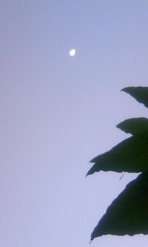 101127_065223朝の月