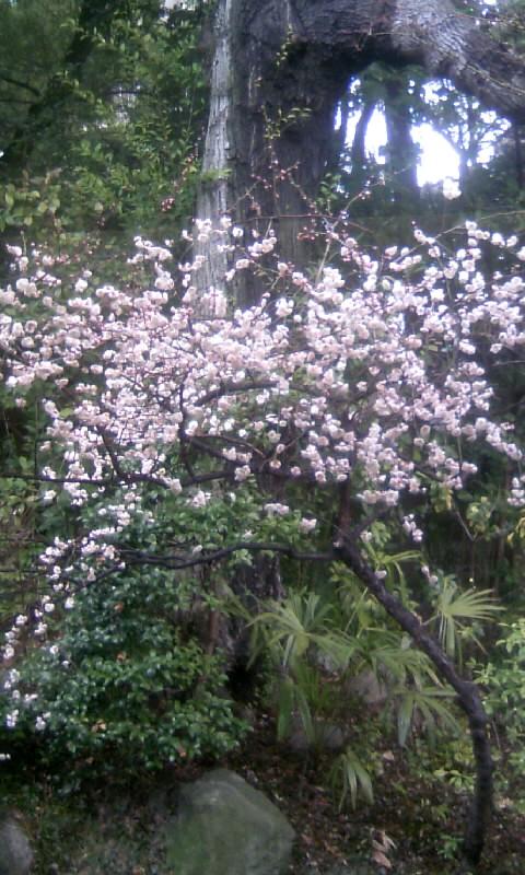 110224_115648徳川園の梅