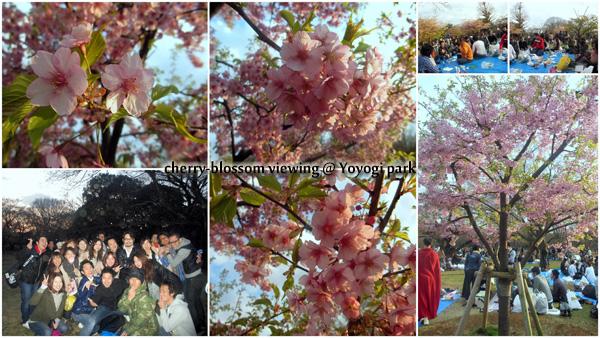 cherryblossom201204のコピー