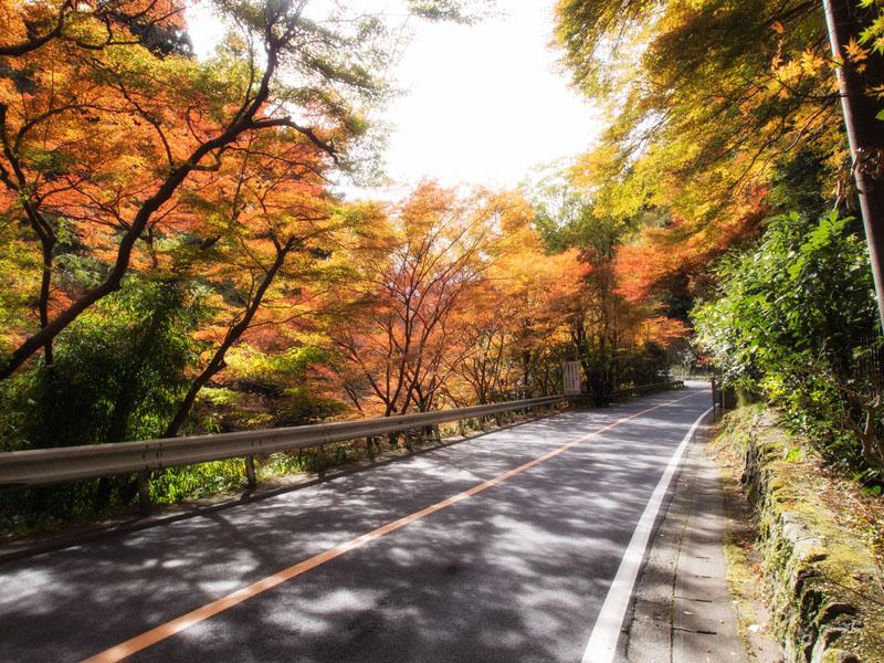 20121110kouzanji12.jpg