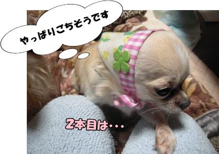 22-12-13あんこ003