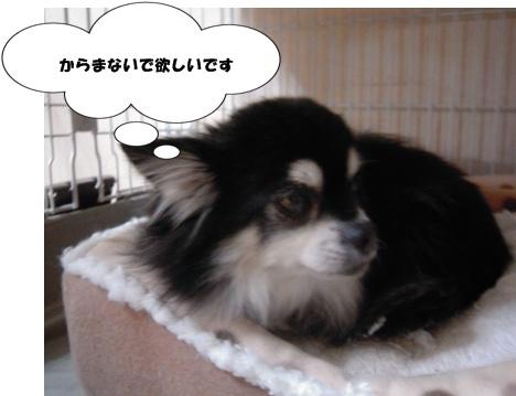 Bi★Biムーン22-12-30022