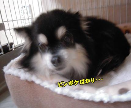 Bi★Biムーン22-12-30021