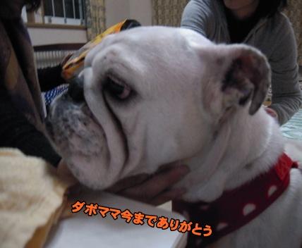 Bi★Biムーン22-12-30030