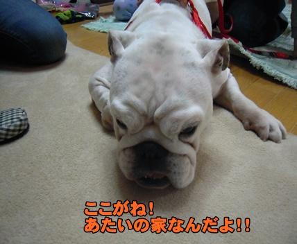 Bi★Biムーン22-12-30031