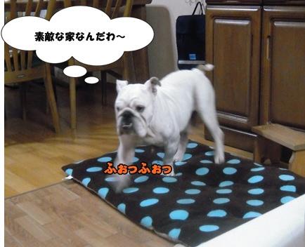 Bi★Biムーン22-12-30018