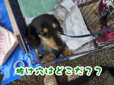 2012-4-14譲渡会023