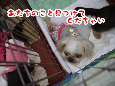 2012-4-14譲渡会013