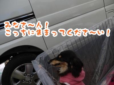 2012-4-14譲渡会020