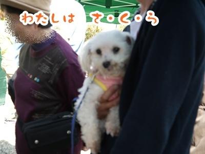 2012-4-14譲渡会033