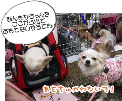 2012-4-14譲渡会028