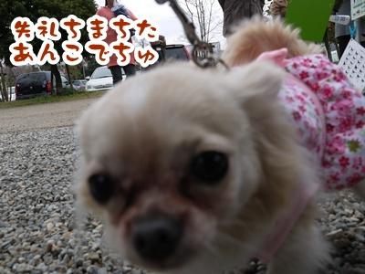 2012-4-14譲渡会025