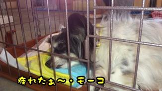 2012-6譲渡会DSC_0075