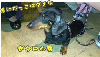 2012-6譲渡会DSC_0099