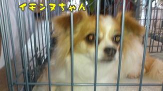 2012-6譲渡会DSC_0081