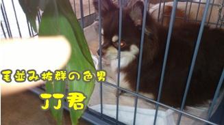 2012-6譲渡会DSC_0069