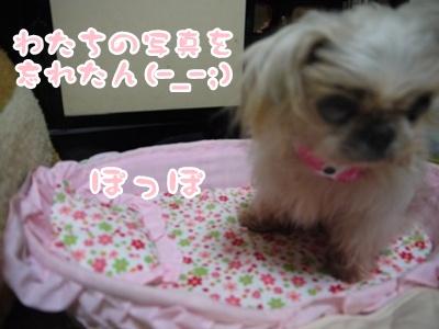 2012-6譲渡会ぽっぽ098