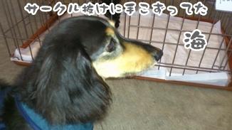 2012-6譲渡会DSC_0076