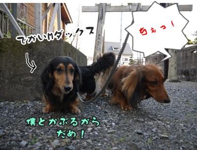 2012-5-17ちぃ坊スタンプ旅立ち061