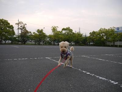2012-5-17ちぃ坊スタンプ旅立ち202