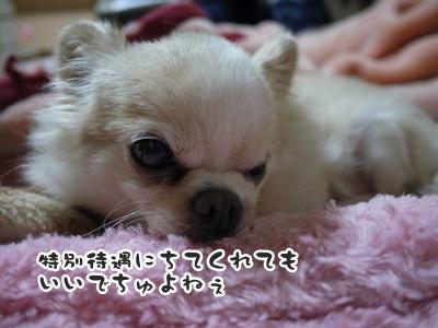 2012-6-21ちぃ坊053