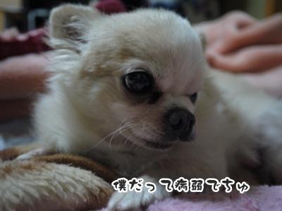 2012-6-21ちぃ坊051