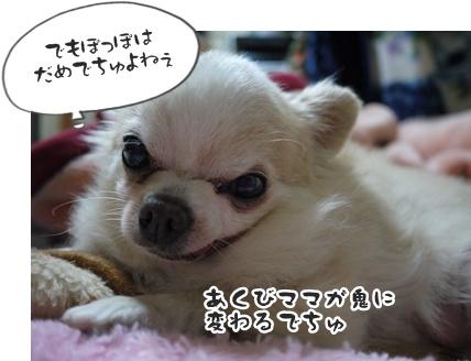 2012-6-21ちぃ坊048