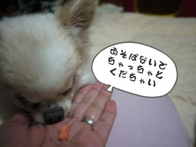 2012-6-21ちぃ坊008