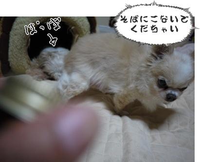 2012-6-21ちぃ坊007