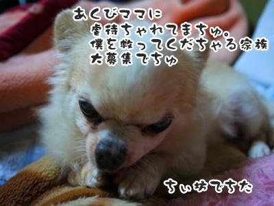 2012-6-21ちぃ坊058