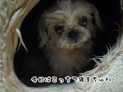 2012-6-27ぽっぽ032