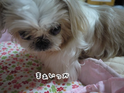 2012-6-27ぽっぽ024