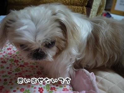 2012-6-27ぽっぽ016