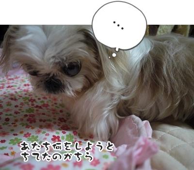 2012-6-27ぽっぽ017