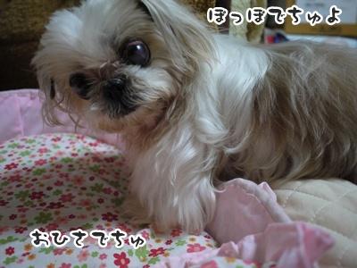 2012-6-27ぽっぽ026