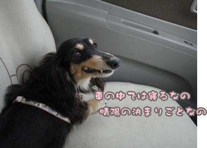 2012-07-01もっこ晴陽005