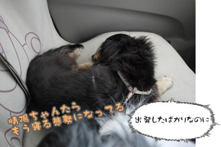 2012-07-01もっこ晴陽002