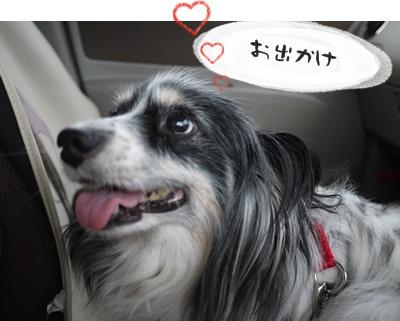 2012-07-01もっこ晴陽001
