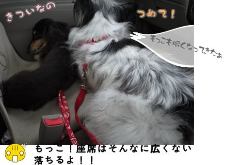 2012-07-01もっこ晴陽003