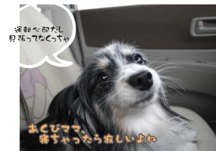 2012-07-01もっこ晴陽010