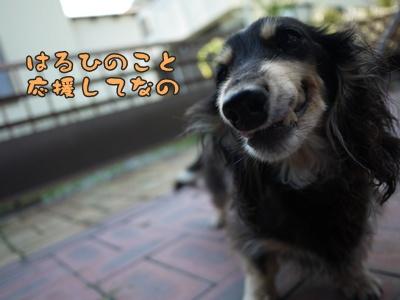 2012-7-7はるひ028