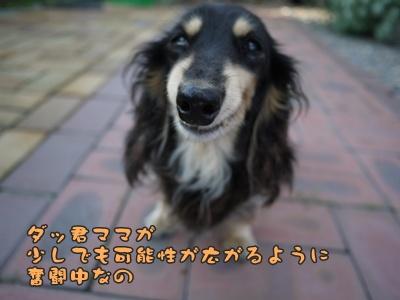 2012-7-7はるひ054