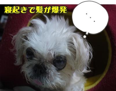 2012-8ぽっぽ012